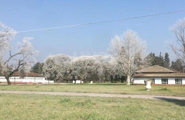 Así aparecieron los árboles en la zona del Liceo en la vecina localidad de Recreo.