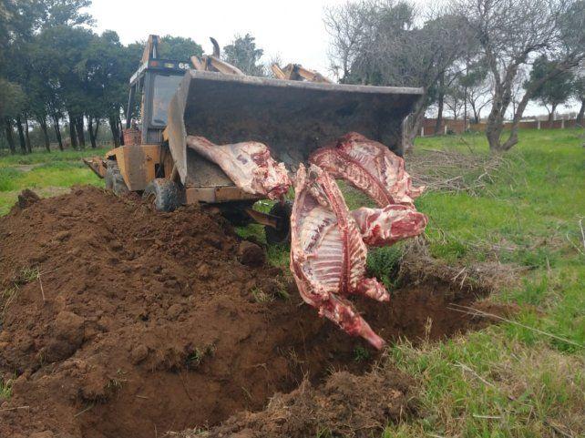 Llevaban 250 kilos de carne en mal estado y los atraparon