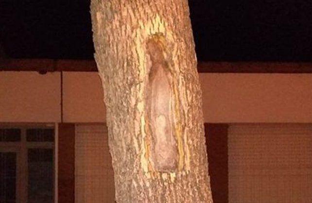La imágen de la Virgen en el tronco de un árbol en la comuna de Carlos Pellegrini.
