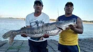 el surubi gigante que pescaron en la laguna setubal