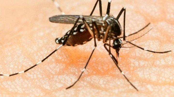 Brindan recomendaciones para prevenir el dengue