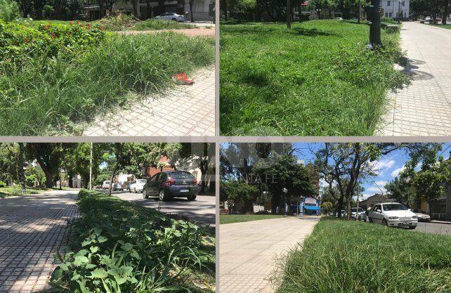 Plaza Pueyrredón. Los vecinos reclaman el corte de yuyos y mayor mantenimiento municipal