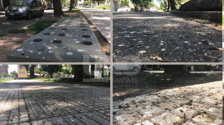 Las palomas regresaron a plaza Constituyentes y arruinan las baldosas del renovado paseo