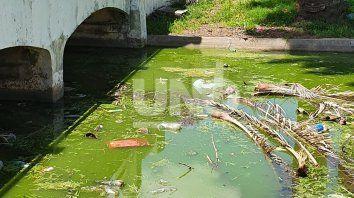 preocupa el mal estado del agua del parque garay