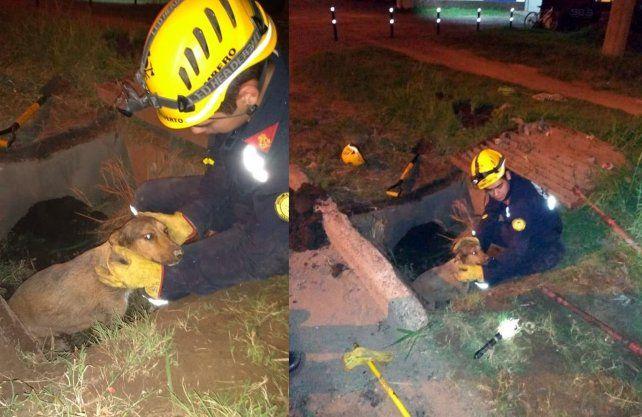 Los bomberos que participaron del rescate son Demian Guzmán, Patricio Batahuer y Ariel Oliva.