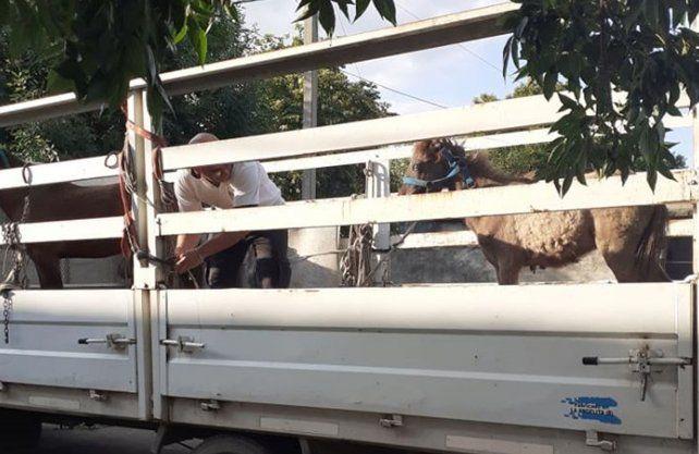 Los animales rescatados