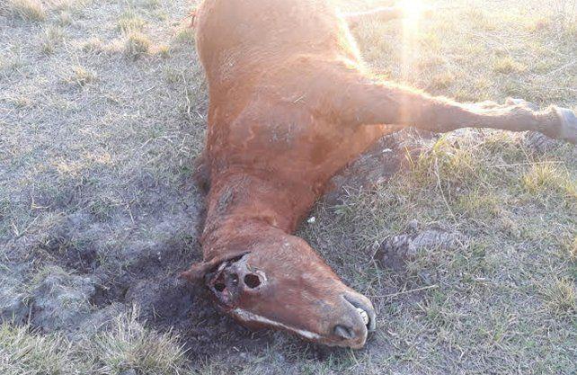 El caballo mutilado en la zona de Avellaneda