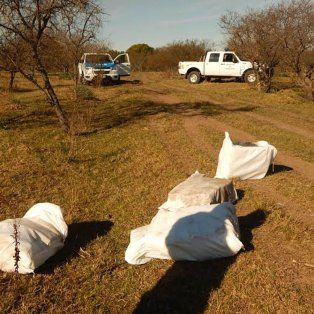 descubrieron que un avion arrojaba bultos con marihuana a un campo cerca de concordia