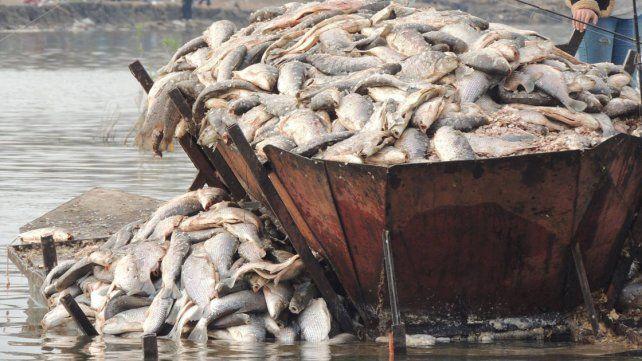 Indignación en Victoria: tuvieron que tirar 8.000 kilos de pescado