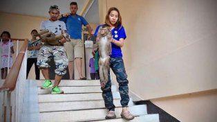 Rescataron a monitos que estaban encadenados en la terraza de un hotel