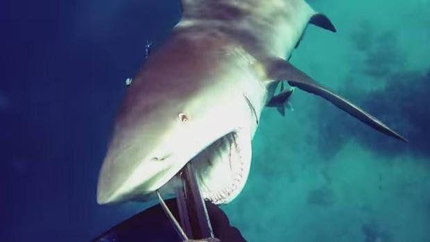 El escalofriante vídeo de YouTube que muestra el ataque de un tiburón a un buceador