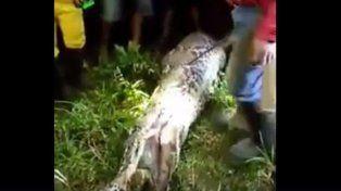Hallaron dentro de una pitón el cadáver de un hombre desaparecido en Indonesia