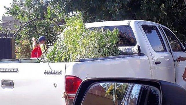 La planta secuestrada en la vivienda de Santo Tomé